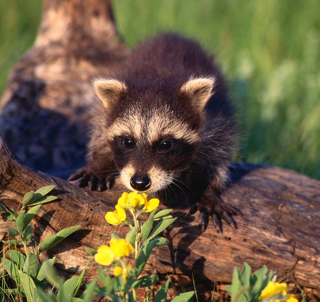 animals-smelling-flowers22