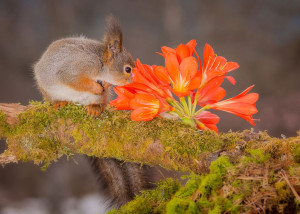 animals-smelling-flowers23