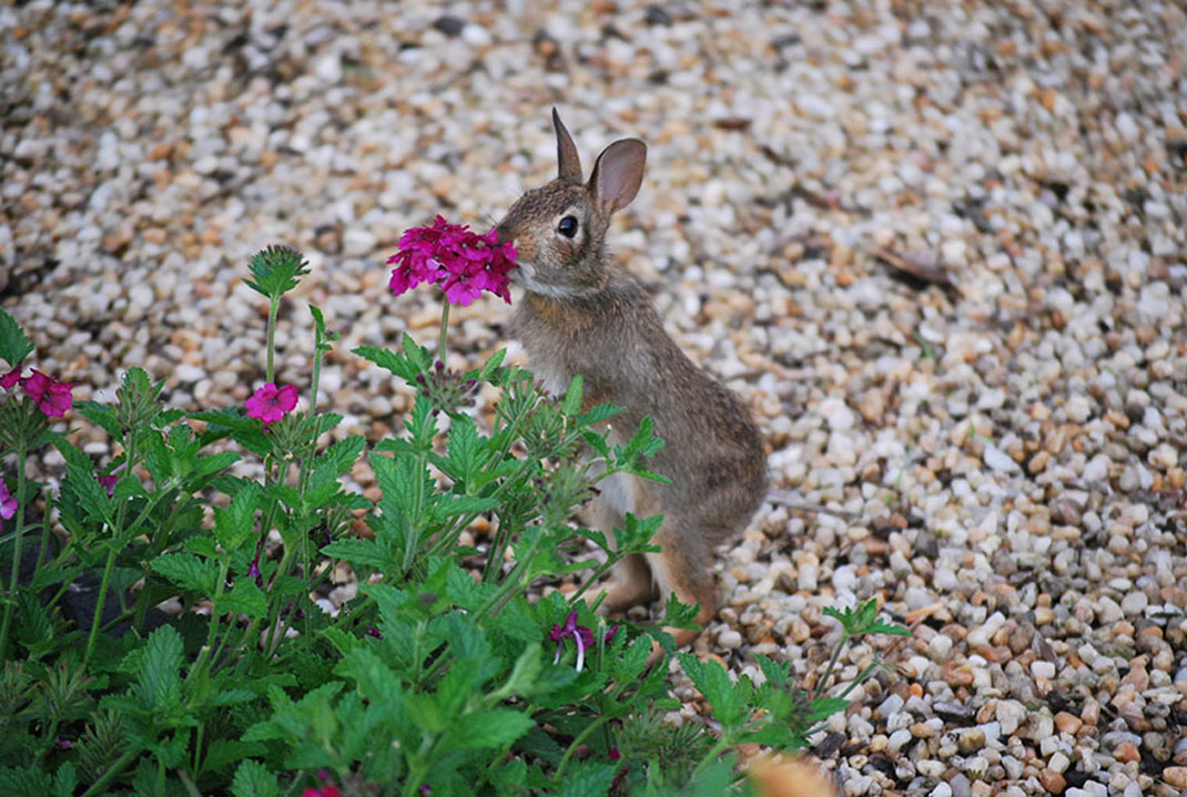 animals-smelling-flowers26