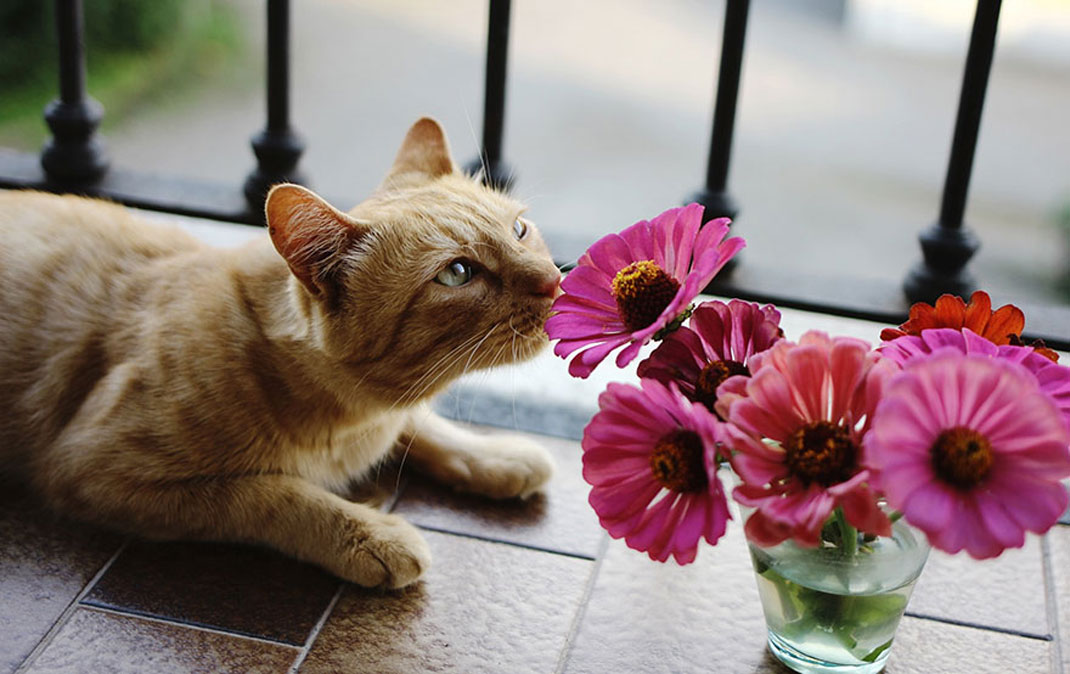 animals-smelling-flowers27