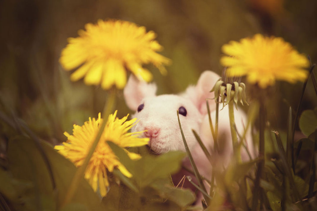 animals-smelling-flowers28