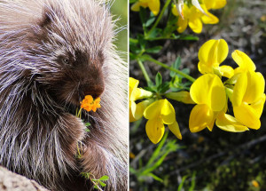 animals-smelling-flowers29