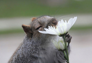 animals-smelling-flowers3