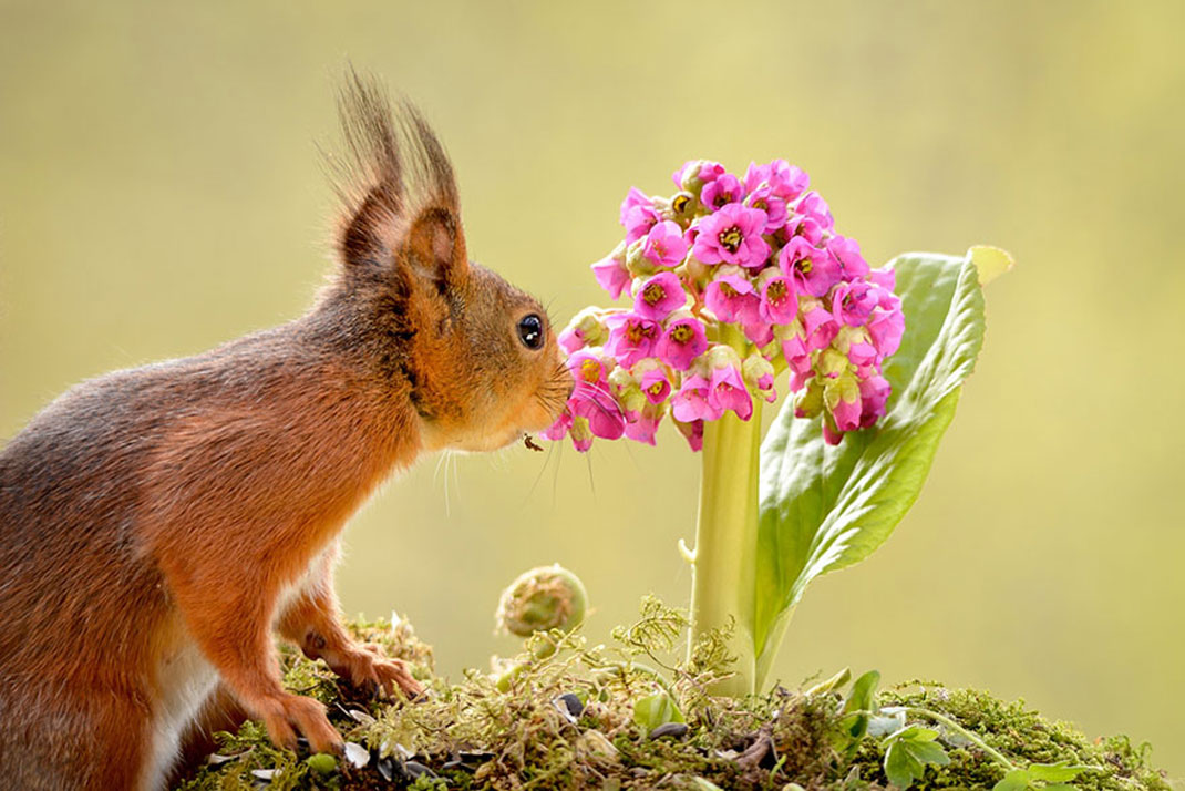 animals-smelling-flowers32