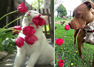 animals-smelling-flowers33