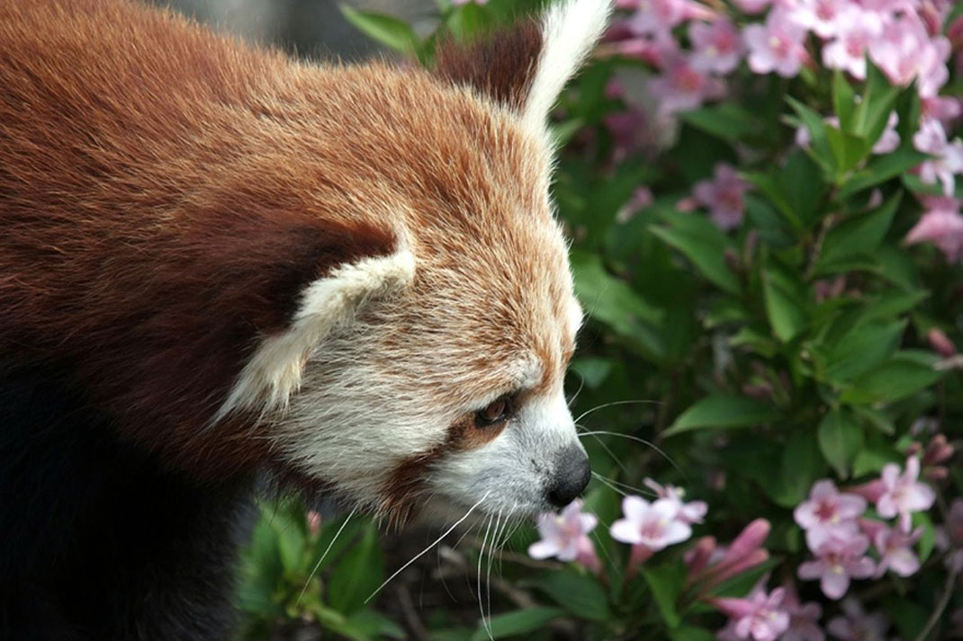 animals-smelling-flowers37