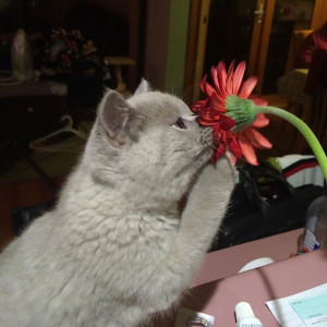 animals-smelling-flowers38