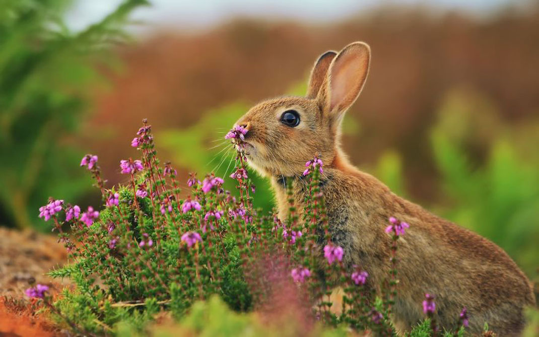 animals-smelling-flowers40