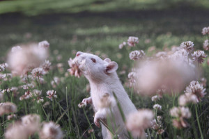 animals-smelling-flowers41