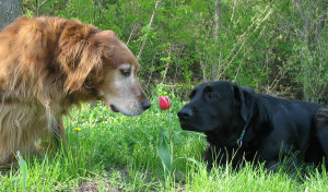 animals-smelling-flowers42