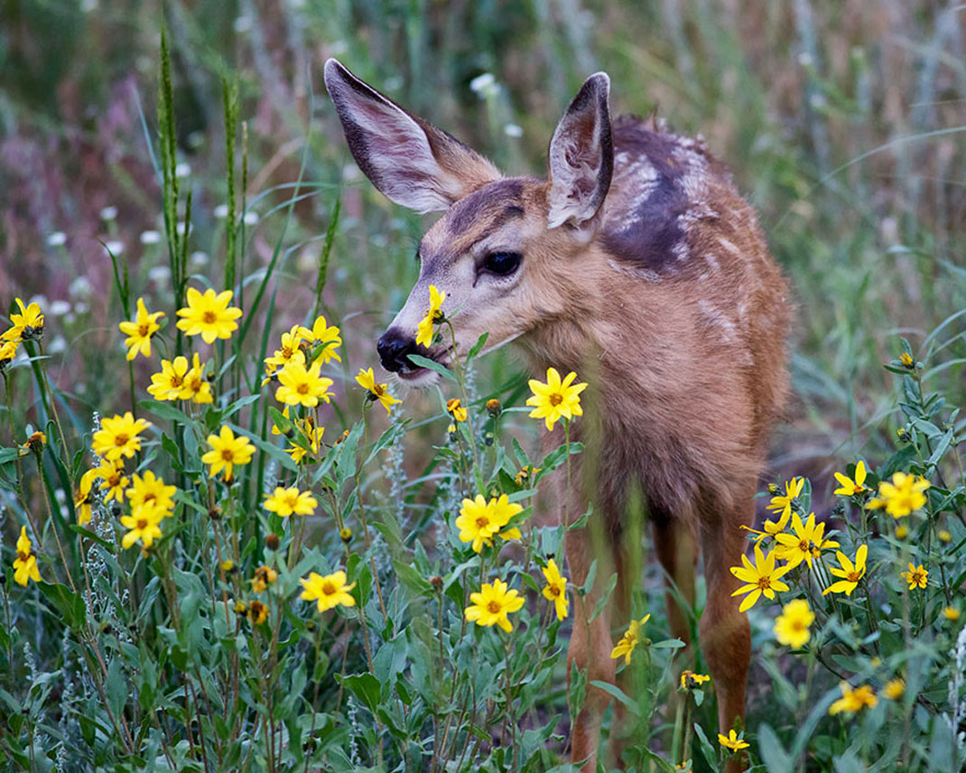 animals-smelling-flowers43