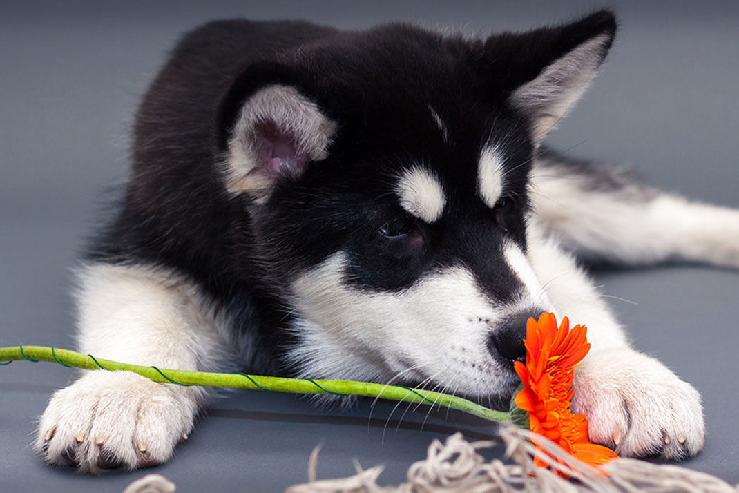 animals-smelling-flowers45