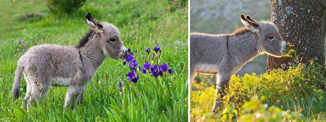 animals-smelling-flowers5