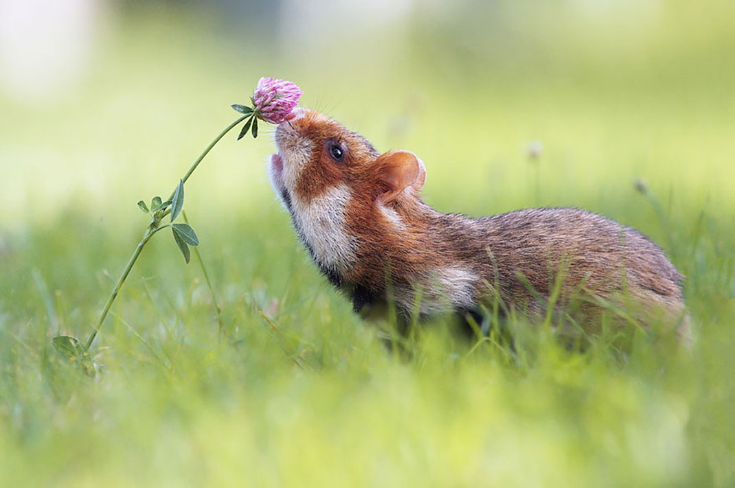 animals-smelling-flowers6