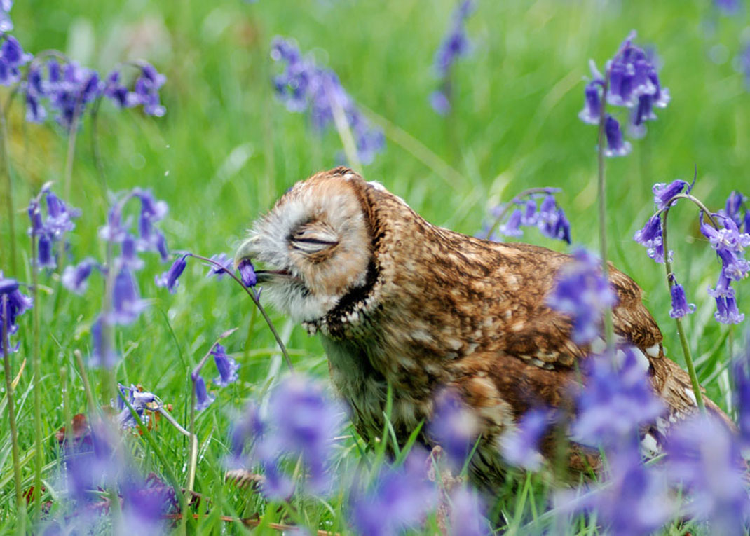 animals-smelling-flowers7