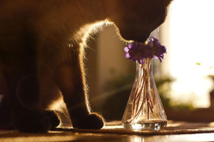 animals-smelling-flowers9