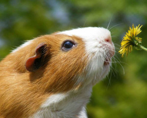 cat-smelling-flowers44