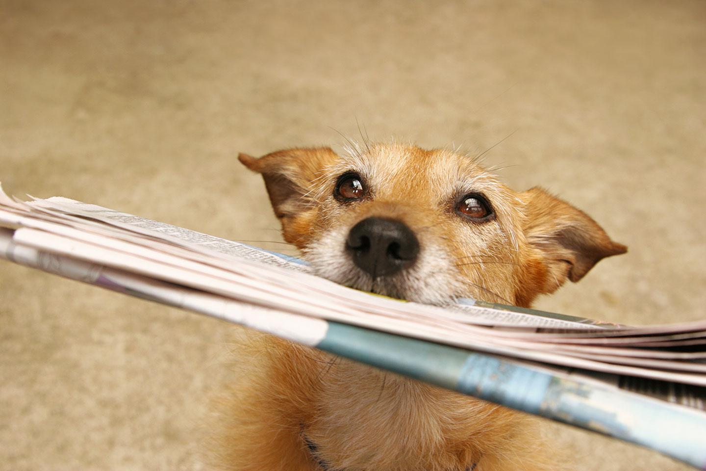 Les chiens sont capables de comprendre les mots mais aussi le ton via Shutterstock