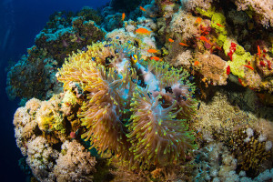 corail-animaux