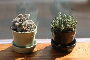 deux-pots