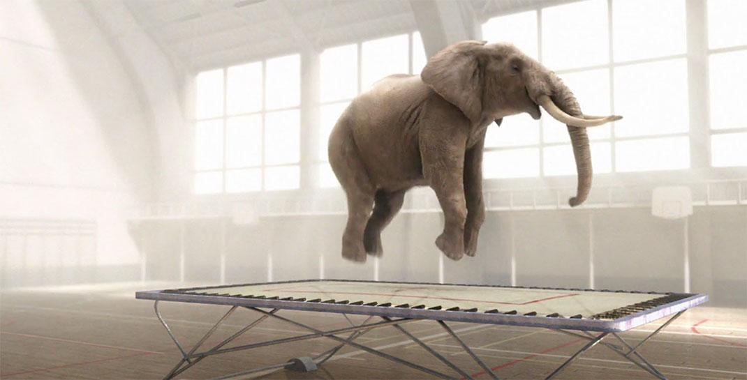 elephant-trampoline