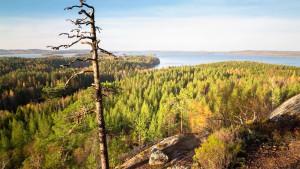 finlande-arbres