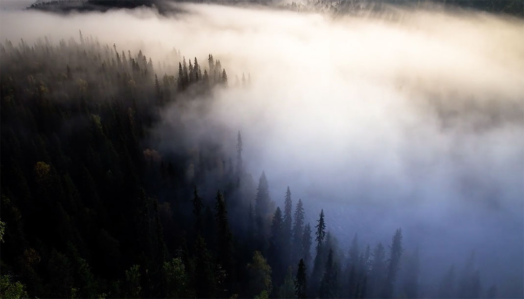 finlande-nuage-foret
