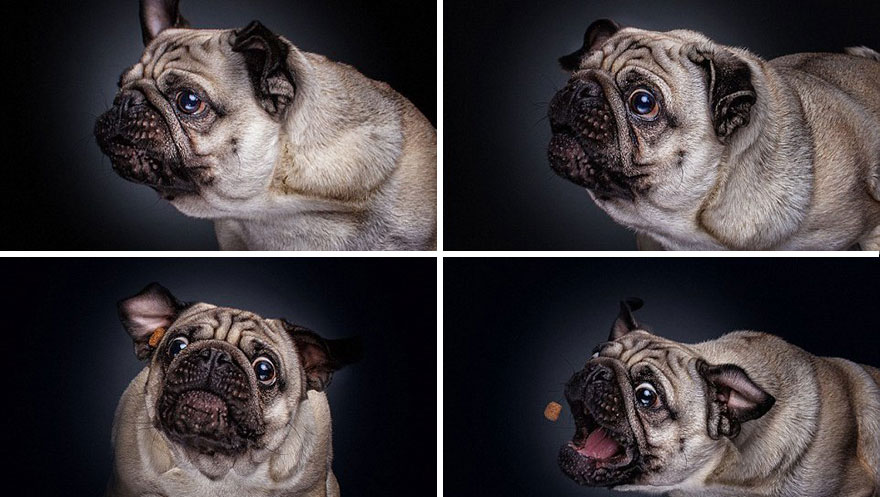 funny-dogs-catching-food-fotos-frei-schnauze-christian-vieler-10