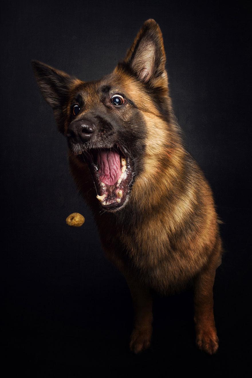 funny-dogs-catching-food-fotos-frei-schnauze-christian-vieler-15 (1)