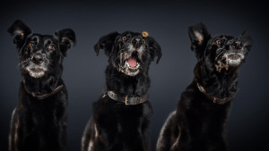 funny-dogs-catching-food-fotos-frei-schnauze-christian-vieler-18