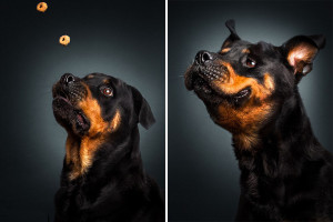 funny-dogs-catching-food-fotos-frei-schnauze-christian-vieler-8