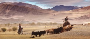 nomades-troupeau-elevage