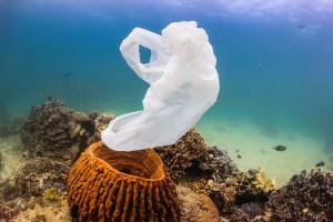 ocean-plastique