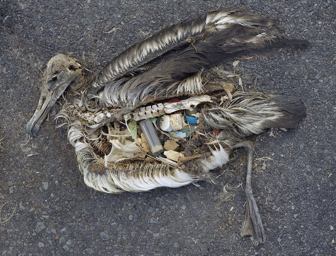 plastique-oiseau