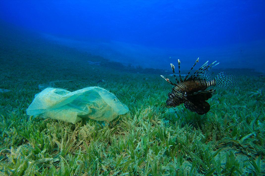 poisson-plastique