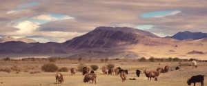 steppe-mongolie-nomades