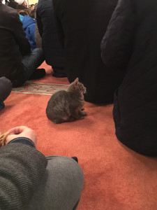stray-cats-mosque-aziz-mahmud-hudayi-mustafa-efe-istanbul-turkey-4