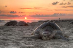 tortue-mer-plage