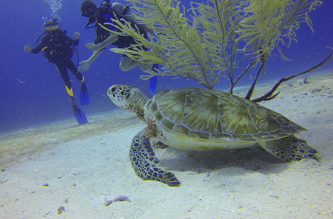 tortue-mer-plongeurs