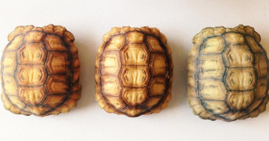 tortues 3D