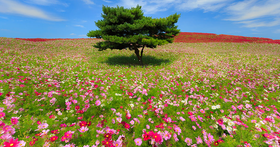 une-arbre-hitachi