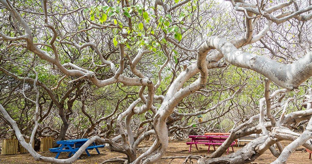 une-arbre-mort