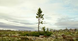 une-arbre-vieux