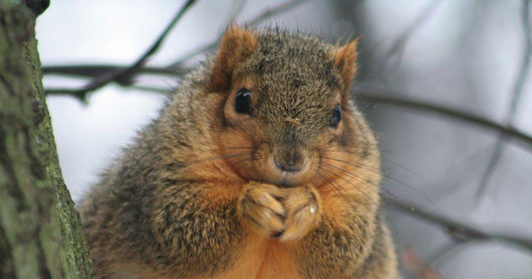 une-ecureuil-1