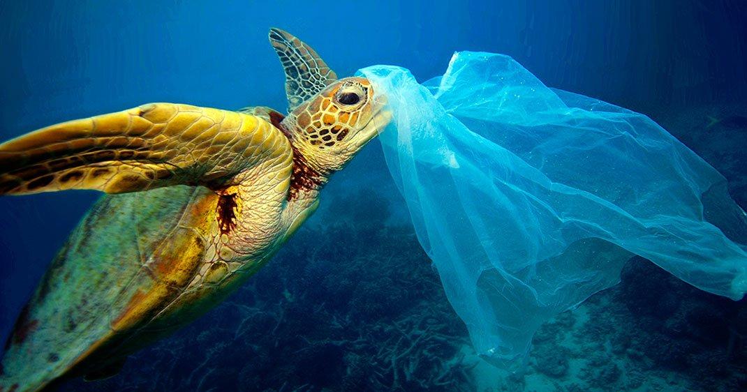 une-tortue-plastique