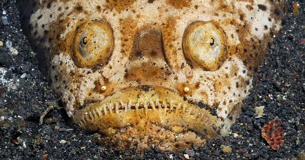 une-uranoscope-poisson
