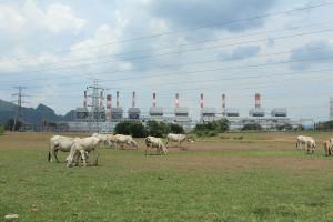 visu-elevage-pollution-2