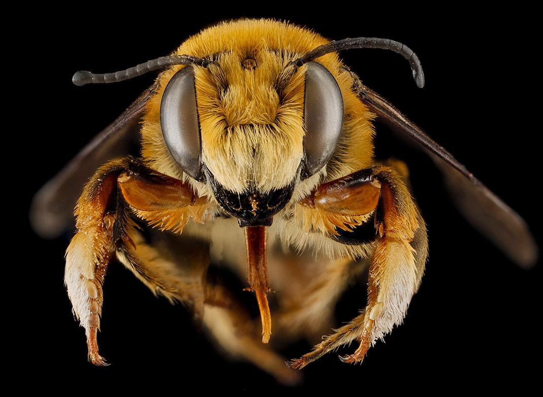 1-abeille-portrait