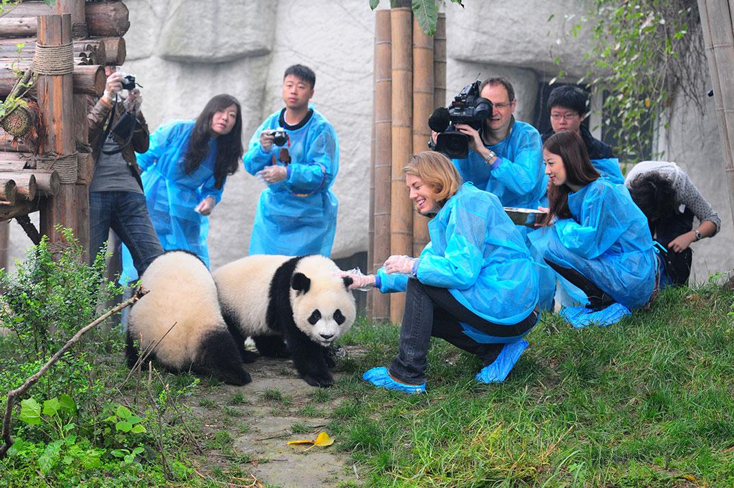soigneurs_panda
