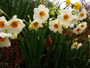10-fleurs-odeur